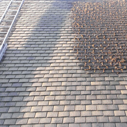 ROOF CLEANING - Alex's Landscaping and Excavating