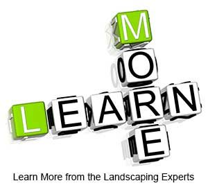 Learn More from the Landscaping Experts