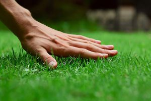 Lawn Care WA