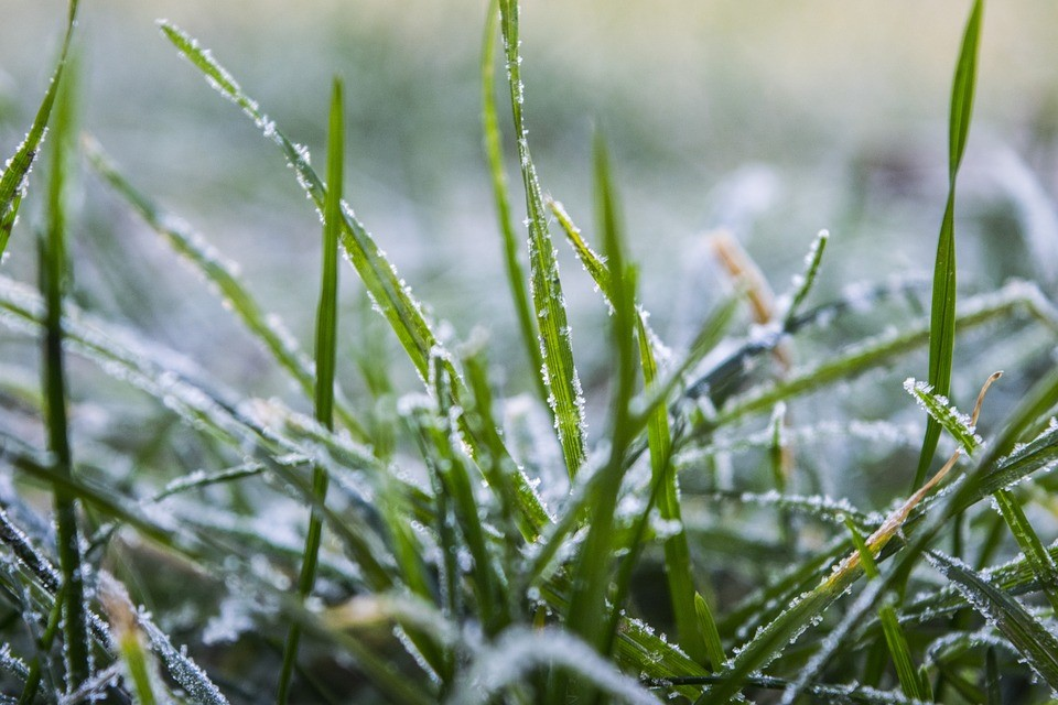 Lawn Maintenance during the Winter