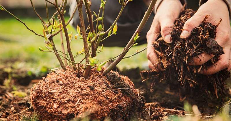 mulch conserve moisture