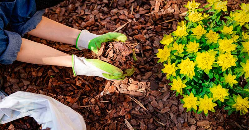 mulching benefits the soil