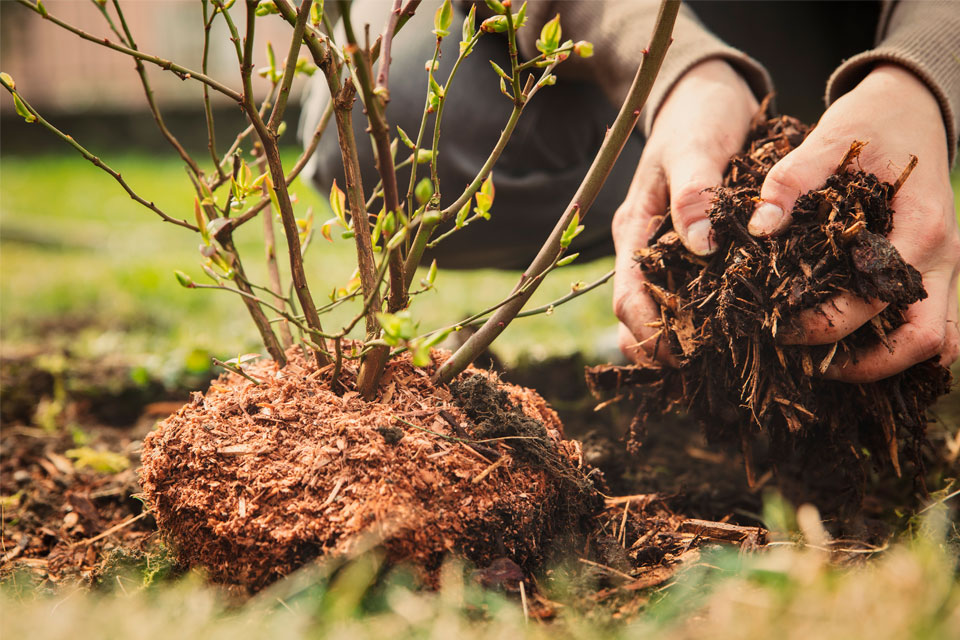 Transform Your Yard: The Top Mulching Benefits