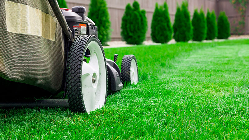 Follow the Proper Lawn Care Procedures We Explain Here!