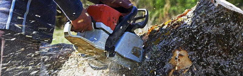 emergency tree removal in Kitsap County WA