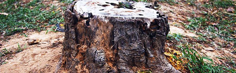 stump grinding in Kitsap County WA