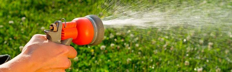 Increase Watering During the Hot Season