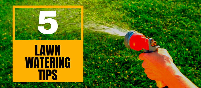 Top 5 Lawn Watering Tips: How to Properly Water Your Lawn